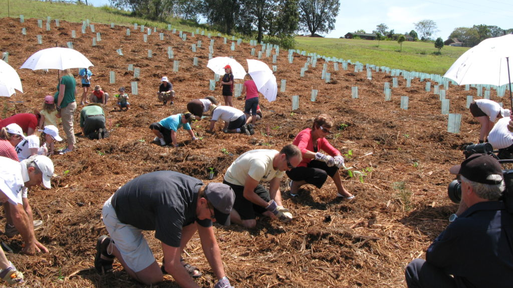 National Lung Cancer Commemorative Tree Planting Day established